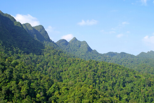 An aerial view of the rainforest.